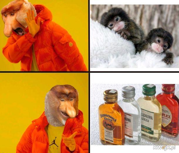 Każdy ma swoją małpkę
