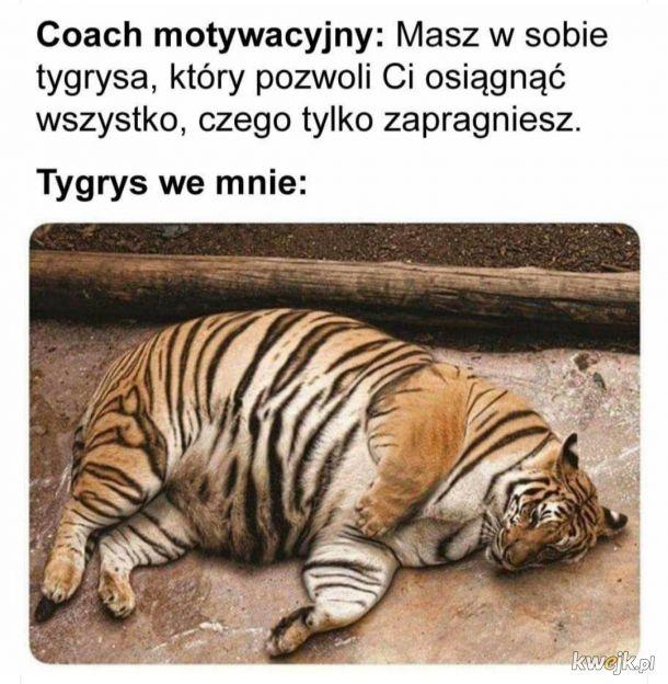 Tygrys we mnie