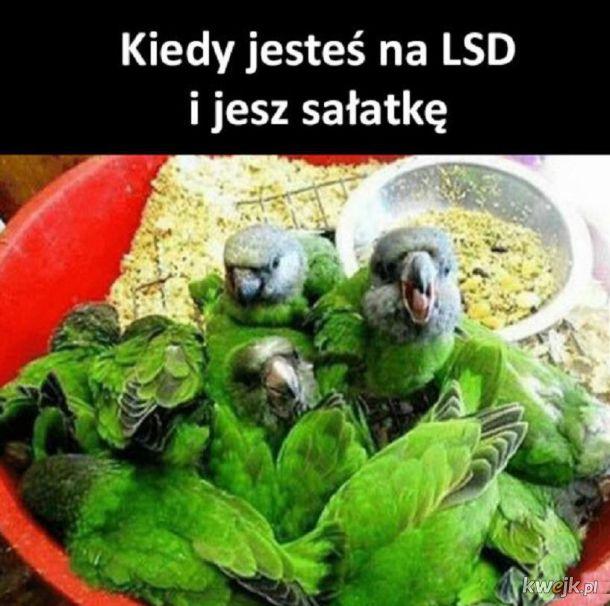 Sałatka po LSD