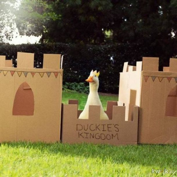 Zapraszam do mojego królestwa, wszyscy mile widziani