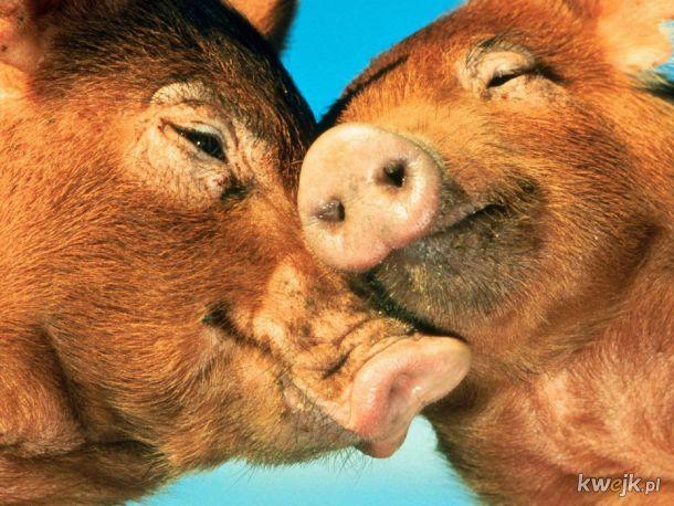 Miłość wśród zwierząt