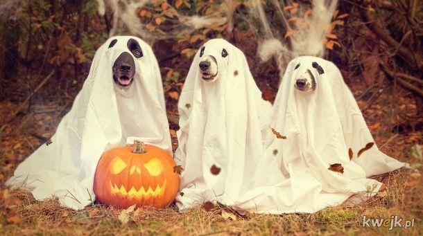 Te zwierzaki są już przygotowane na Halloween!
