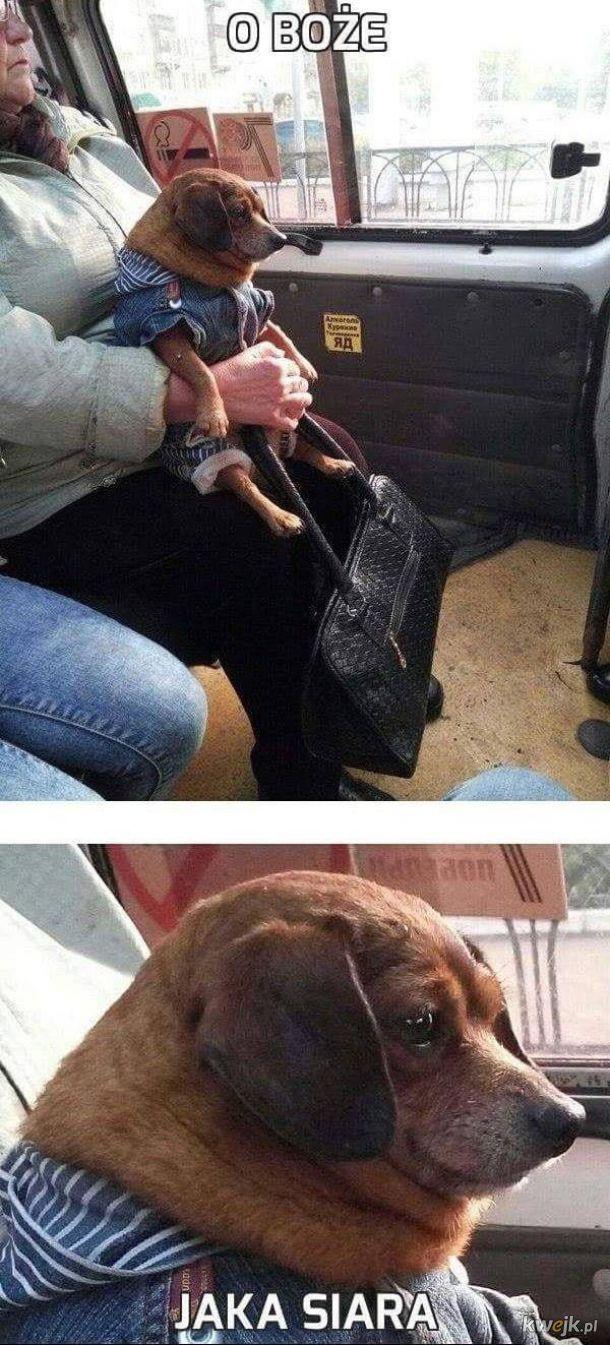 Biedny pies