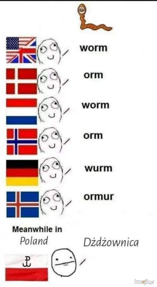Polski język, wspaniały język