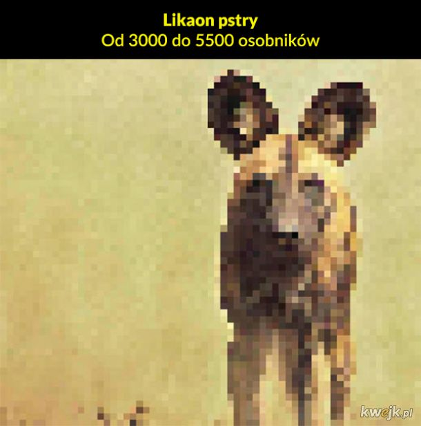 Jeden piksel to jeden osobnik pozostały na Ziemi, obrazek 2