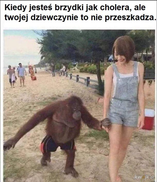 Musi być cholernie bogatym orangutanem