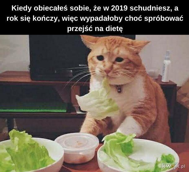 Kotek na diecie