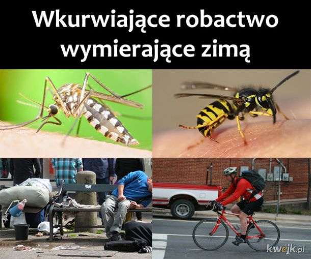 Robactwo