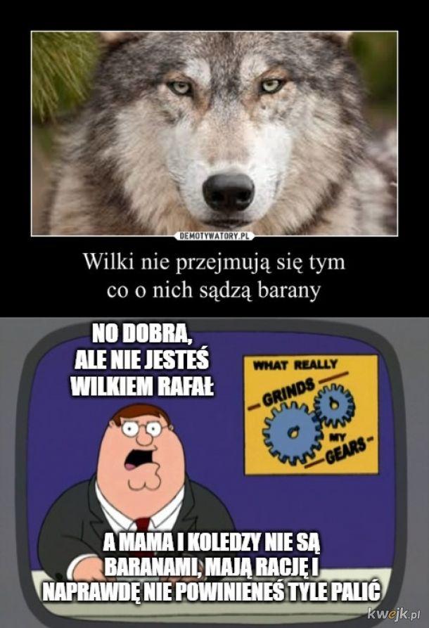 Wilki nie przejmujo sie tym co o nich sądzą barany