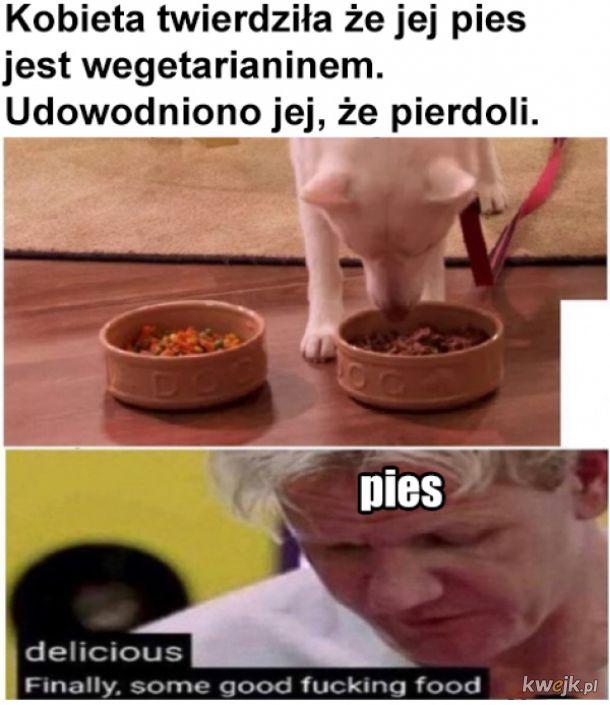 Pies wegetarianin