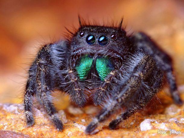 i tak dla większości ludzi pająki są obrzydliwe. Ten słodziak też?