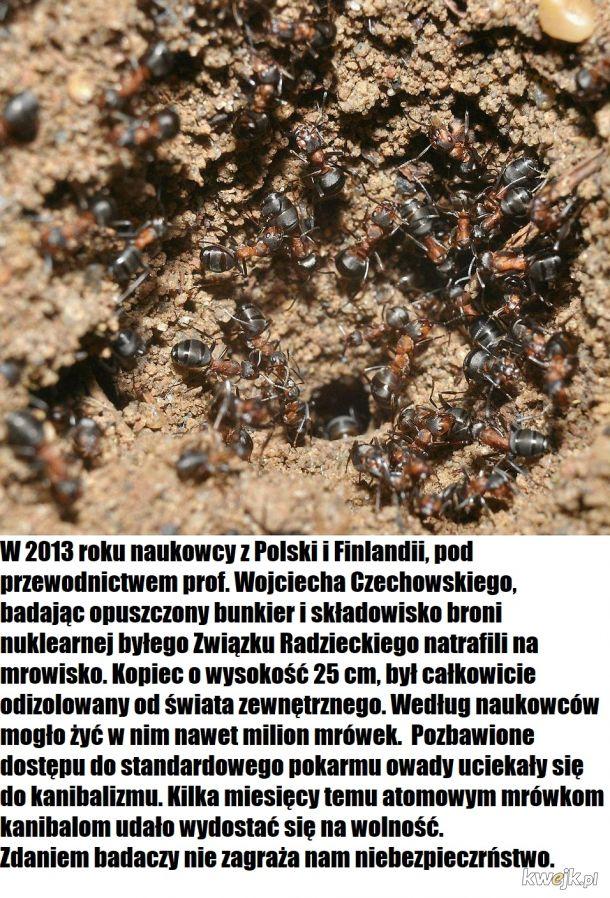 Nadciąga apokalipsa atomowych mrówek kanibali