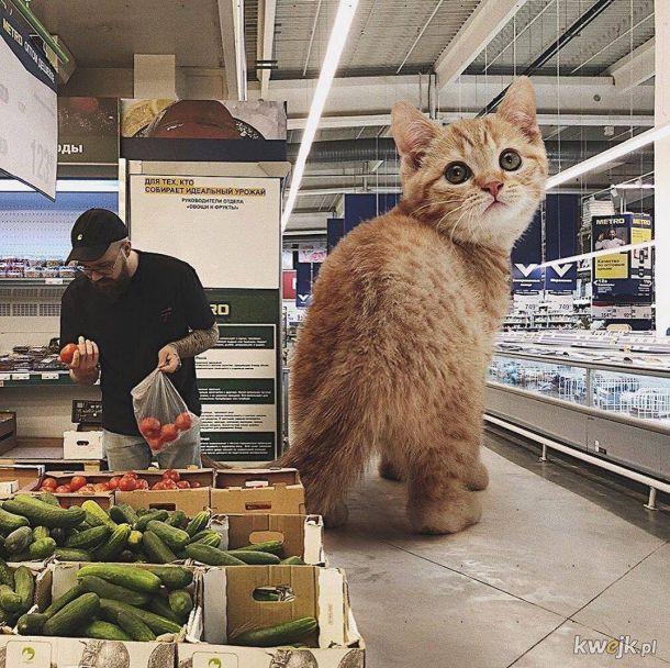 Jeśli koty byłby gigantami