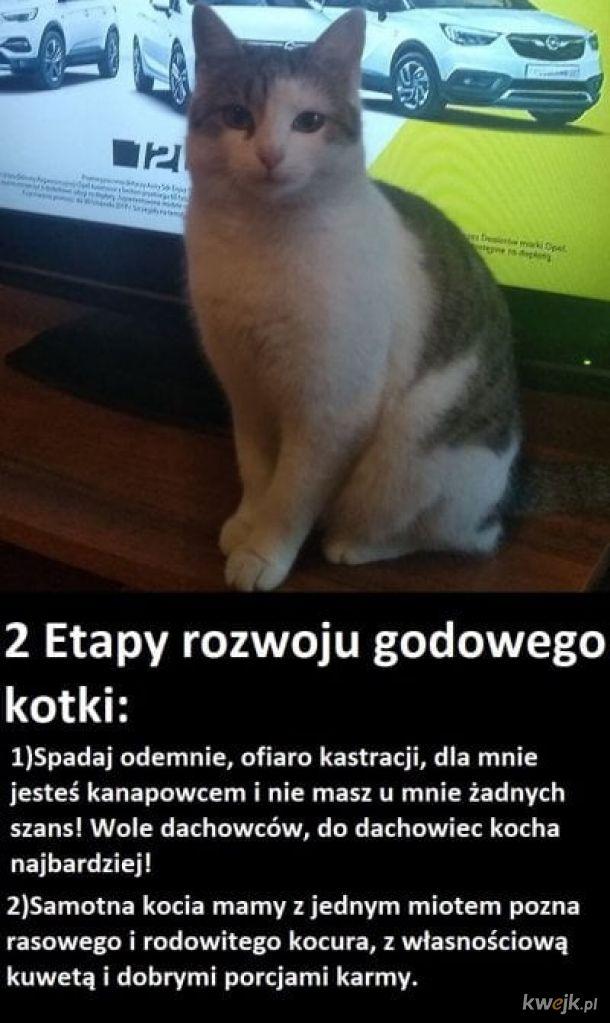Rozwój kotki