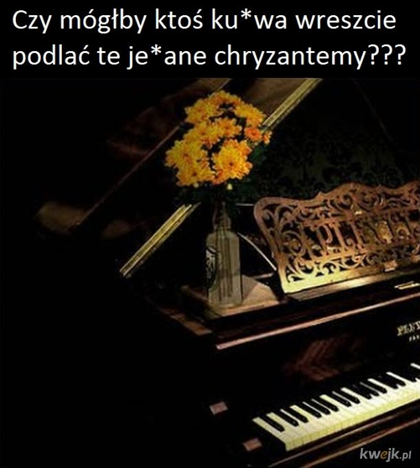 Chryzantemy