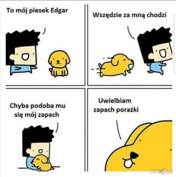 Piesek Edgar