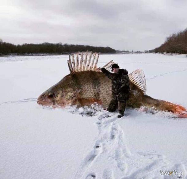 Takie tam z łowienia ryb