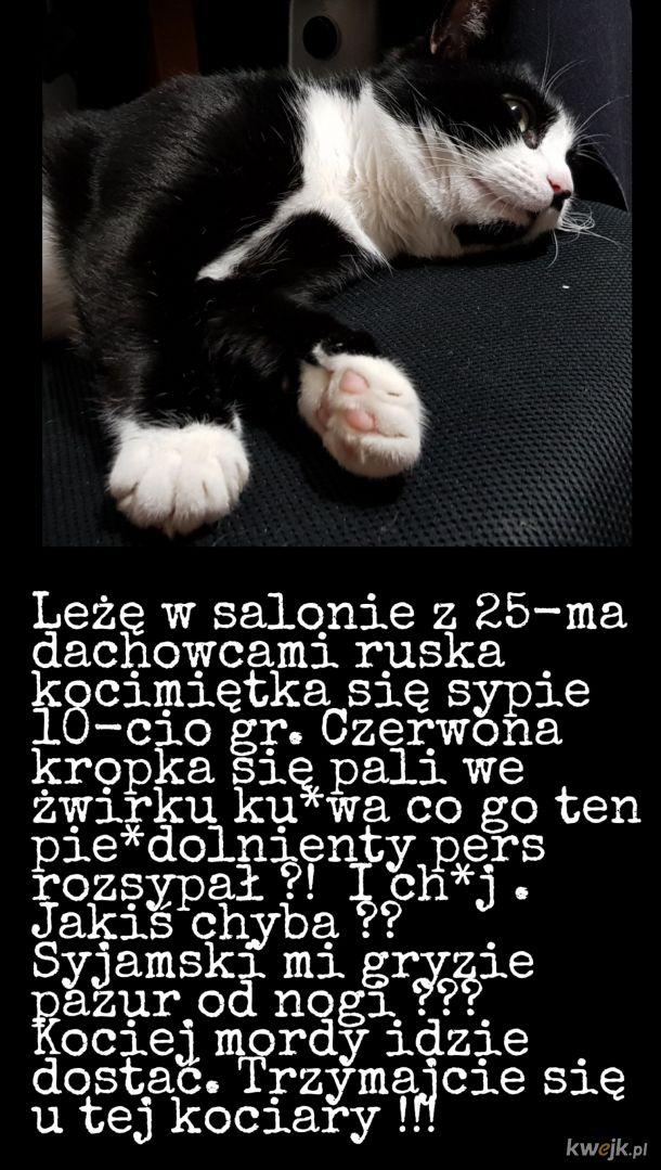 Koci Żywot