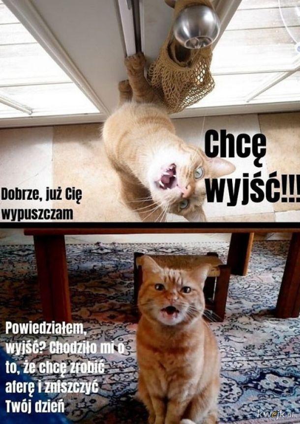 Każdy kot to menda