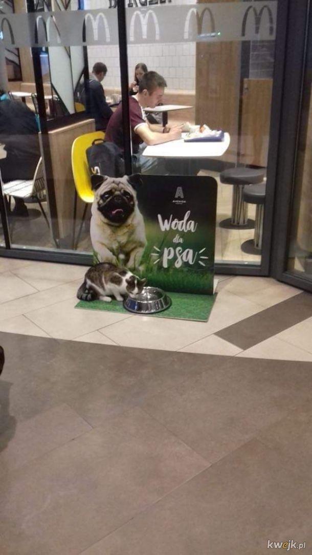 Dziwny pies