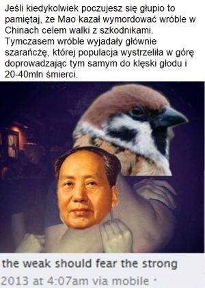 blumo99