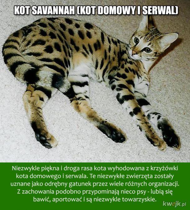 To żaden fotoszop, te zwierzęta istnieją naprawdę!