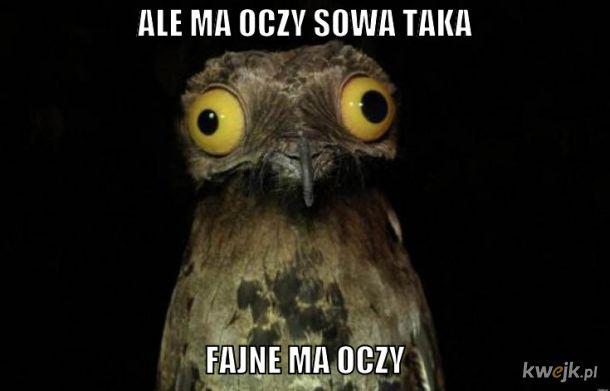 sowa z oczami