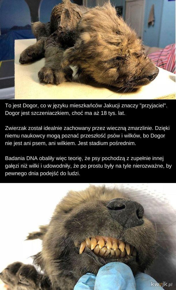Dogor