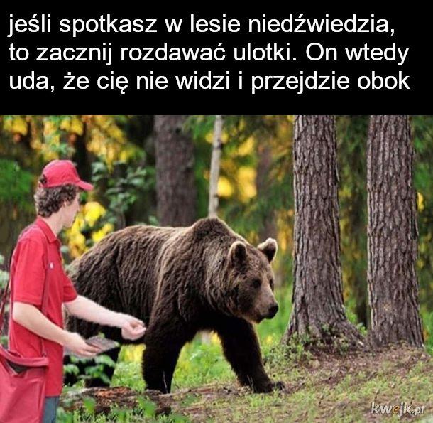 Przetrwać spotkanie z niedźwiedziem