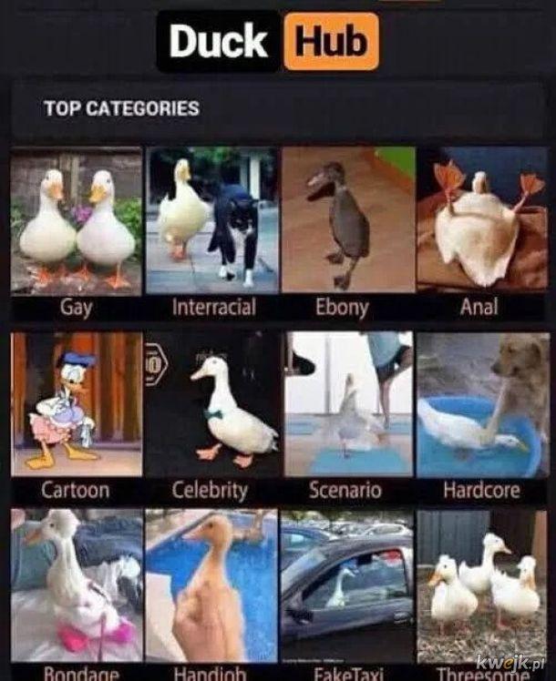 Kocham teraz kaczki