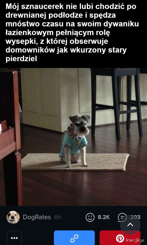 Pan Sznaucerek