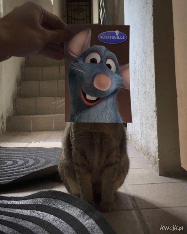 Koty jako bohaterowie filmów