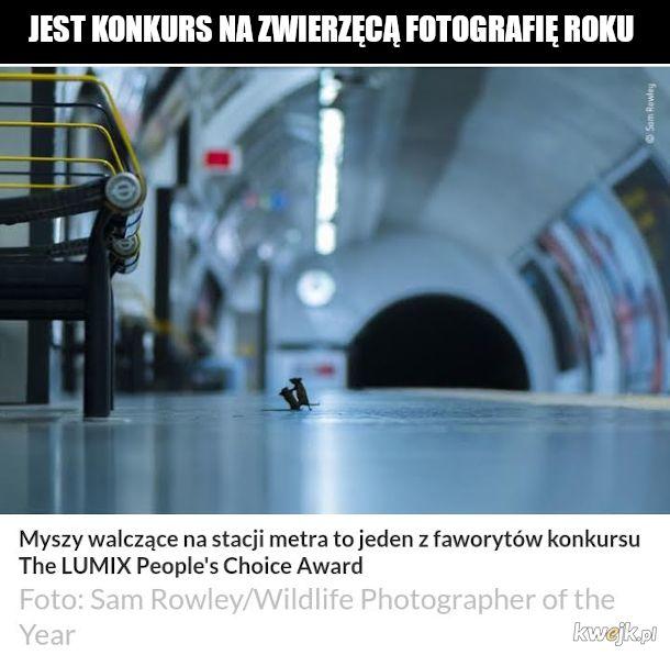 Konkurs dla fotografów zwierząt