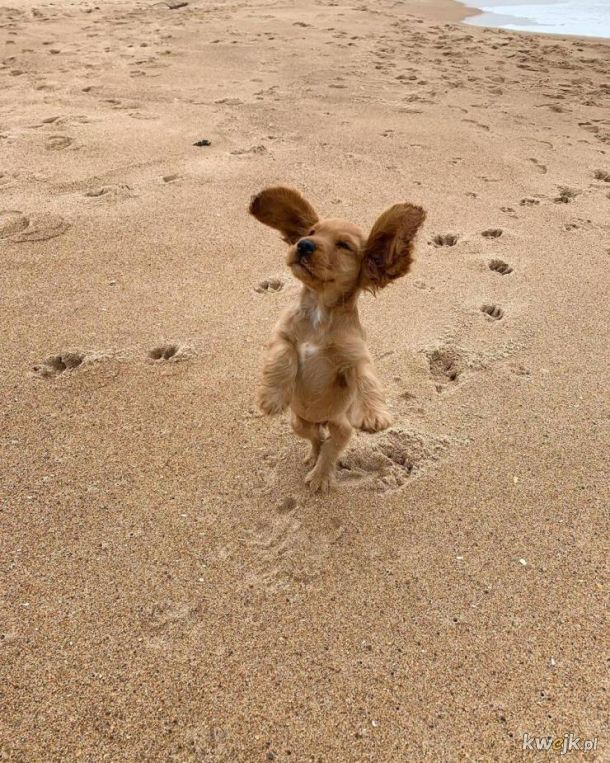 rzadkie zdjęcie psa przygotowującego się do odlotu