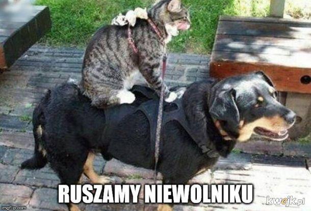 No to ruszamy