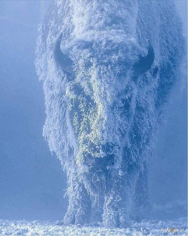 Zimowy kamuflaż
