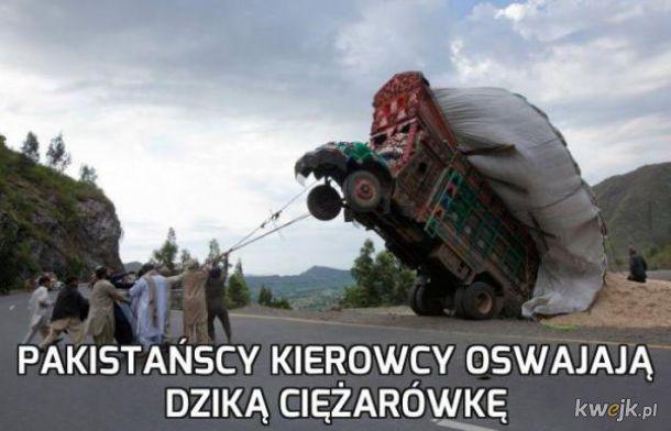 Oswajanie