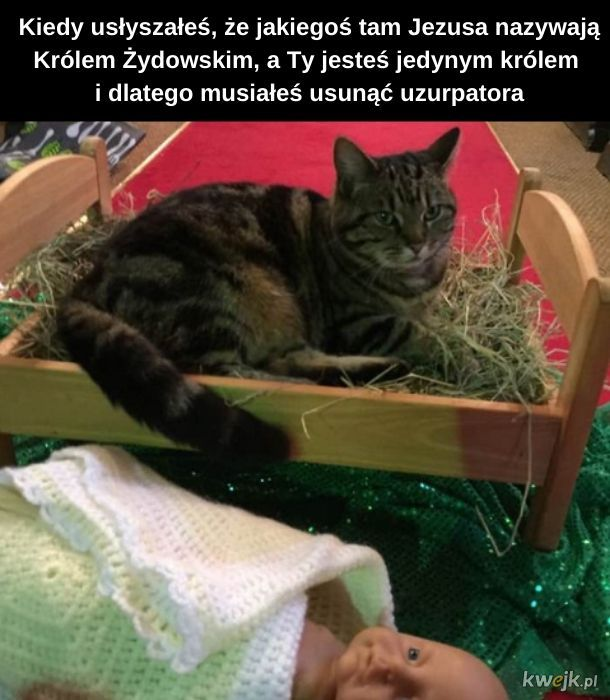 Koteł-piłaten