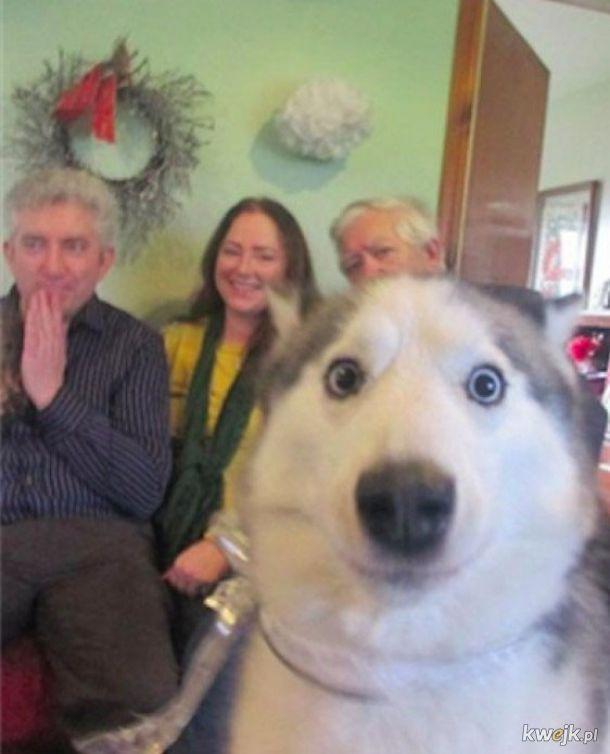 Psy, które znalazły się w kadrze w nieoczekiwanym momencie