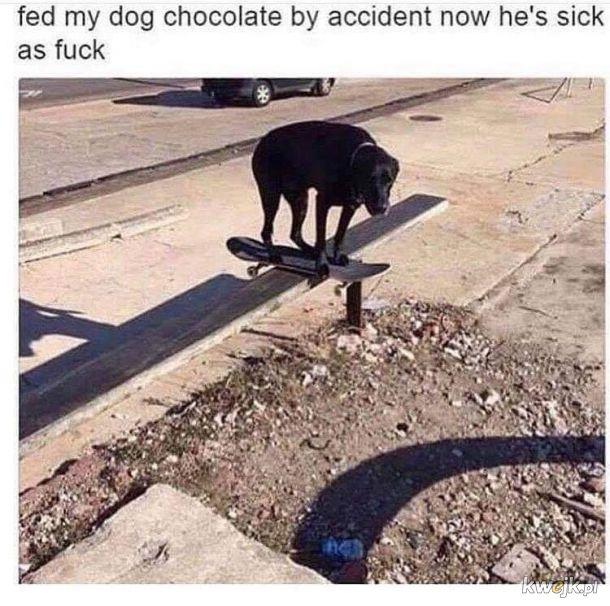 Nie dawaj psu czekolady!