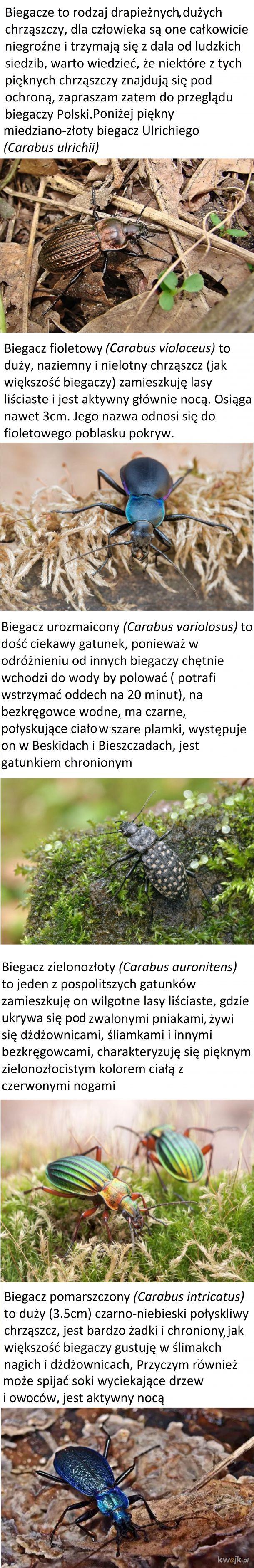 Biegacze Polski