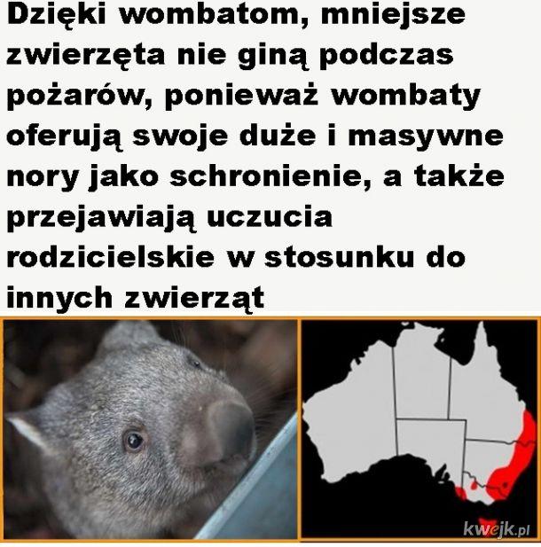 Kochane wombaty