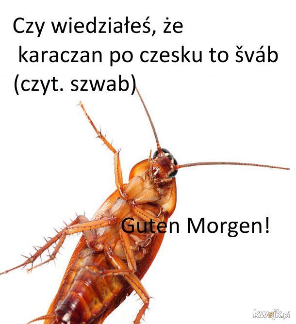 Szwab