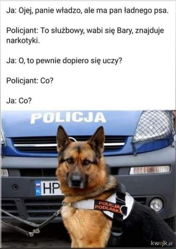 Służbowy pies