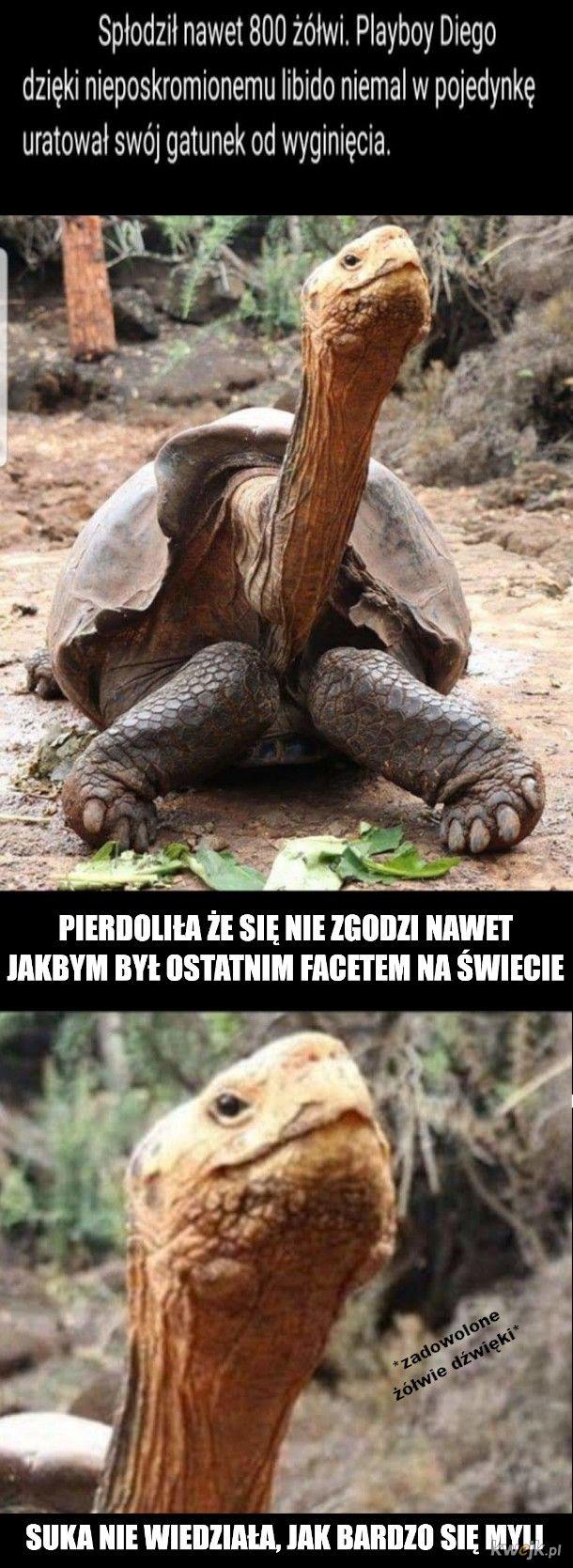 Żółw wygryw
