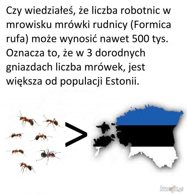 Rudnice i Estonia