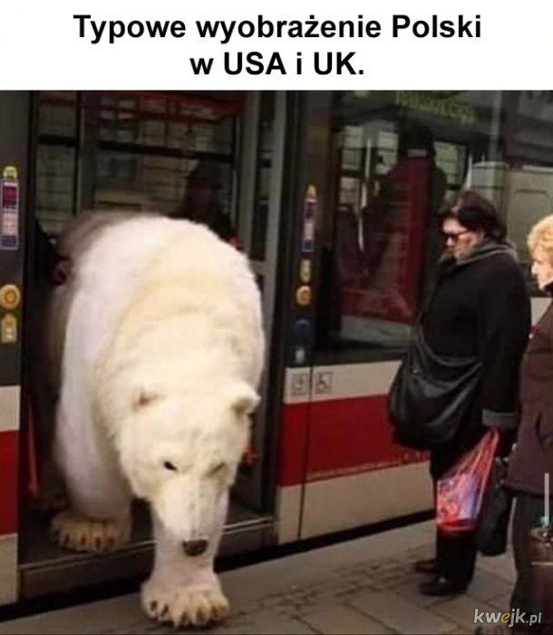 Niedźwiedzie na ulicy
