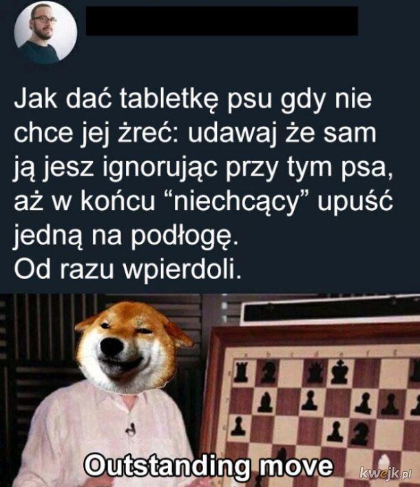 Tabletka i pies