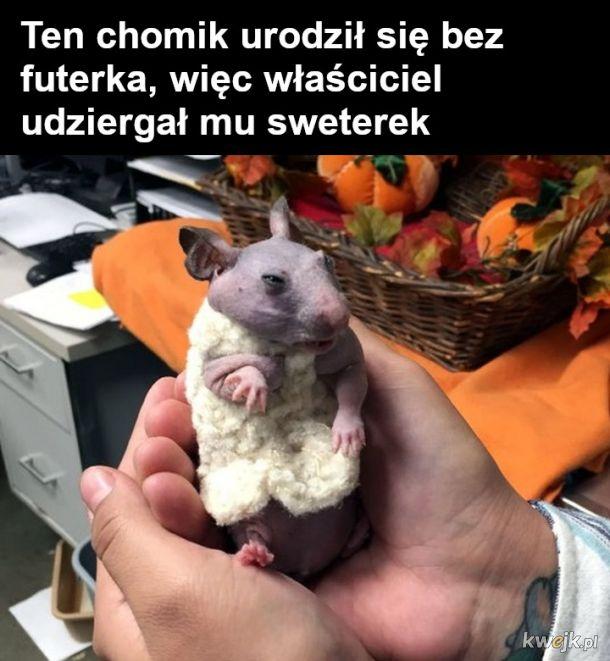Zwierzęta z defektem genetycznym, tak samo kochane