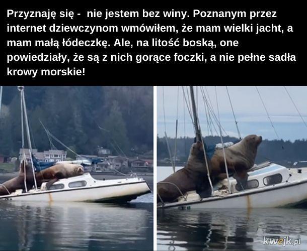 Lew. Lew morski. Nie krowa. Tak tylko mówię...